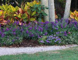 Flowers For Window Boxes Partial Shade - 15 best flowers for summer costa farms