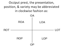 lie presentation attitude and position