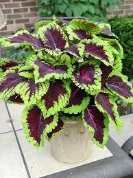 Plant Flower Garden - 142 best gardening flowers yard images on pinterest gardening