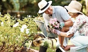 Summer Gardening - 7 tips for summer gardening success