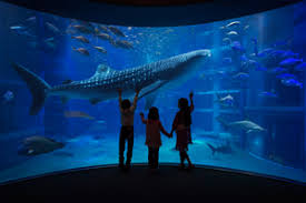 japanese aquarium osaka aquarium kaiyukan