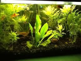Aquascape Designs Inc Aquascape Designs For Your Aquarium Room Furniture Ideas