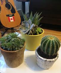 succulent house garden therapy hardy houseplants tribute journal