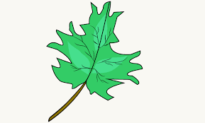 how to draw a leaf easy drawing guides