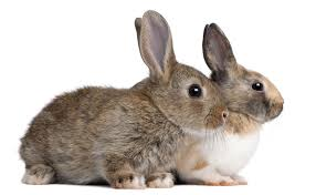 rabbit bunny how to sell rabbits