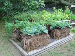 intensive gardening layout different gardening methods and the pros and cons of each migardener