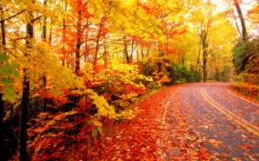 42 autumn backgrounds download free stunning hd wallpapers