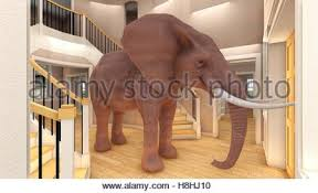 elephant in the living room elephant in the room metaphor for an obvious problem or risk no one