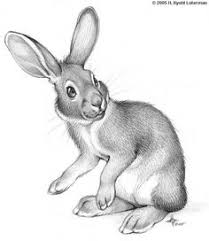 image result for cute bunny sketch bunny book pinterest sketches