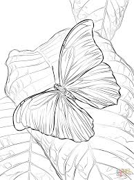 giant blue morpho butterfly coloring page free printable