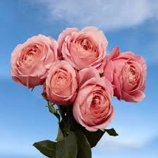 global roses 29 best wedding roses images on bridal bouquets