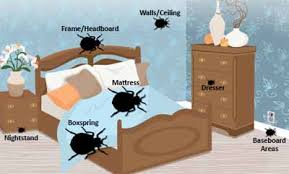 Home Remedies For Getting Rid Of Bed Bugs Home Remedies For Getting Rid Of Bed Bugs