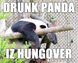 Panda Meme - drunk panda meme on imgur