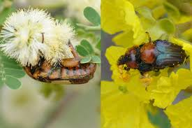 native african plants caught on camera despite hard shells pollen sticks to south