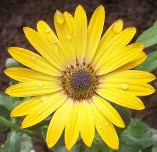 this just says fresh garden pinterest yellow flowers