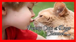 Funny Cat Lady Memes - funny cat lady memes funny cat puns hardcore funny cats