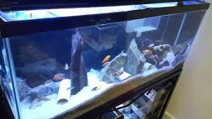 aqueon led aquarium light fixture 36 inch ebay 48 led aquarium light review cll petsupplies youtube