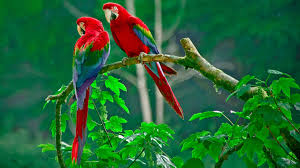 hd images of flowers bird wallpapers free download beautiful colorful hd desktop images