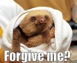 Dirty Sloth Memes - best sloth memes sloth best of the funny meme