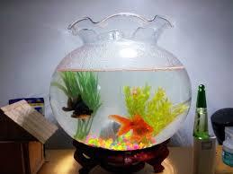 membuat filter aquarium kecil filter untuk aquarium bulat kaskus