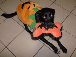 Lab Halloween Costume Ideas Costume Ideas For Your Fur Pal