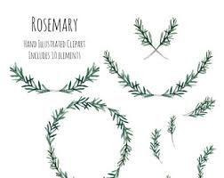 herb wreath clipart illustration rosemary herb wreath frame