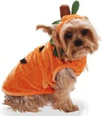 Small Dog Halloween Costumes Ideas 12 Halloween Costumes Ideas Dog Images