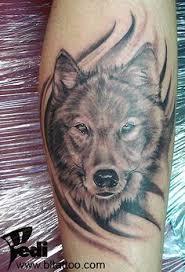 wolf black and grey zoeken wolfs