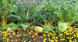 companion planting a basic know how gardening abc