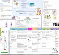 osteoarthritis concept map pathophysiology clinical