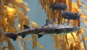 5 fearless shark week activities for kids duck duck moose