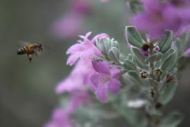10 plants to attract and feed honeybees lifegate