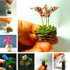 ship flowers free ship cattleya hybrida flower seeds 100 pcs flowers