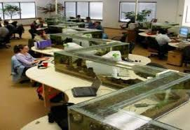 Fish Tank Desk by 24 Unbelievable Fish Tank Displays Gallery Ebaum U0027s World