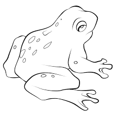 Free Frog Coloring Pages To Print Out And Color Frog Colouring Page