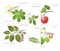 montessori tree printable 32 best botany add ons images on pinterest botany school themes