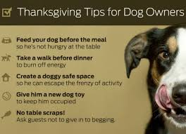 thanksgiving tips for owners just right by purina