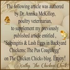 backyard chicken blogs the chicken causes of lash eggs u0026 salpingitis by annika