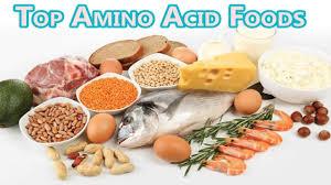 foods high in amino acids u0026 protein diet to build u0026 repair muscles