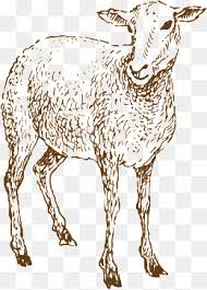 sheep painted sketch graphic design sheep animal png and vector