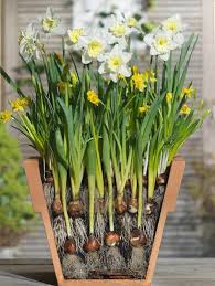 45 best bulb stacking images on bulbs garden