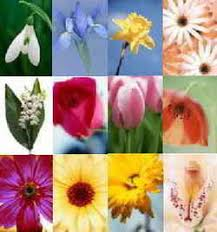 flowers of the month birth flowers birthstones month color meaning