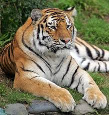 zoo settles with brothers in tiger attack sfgate