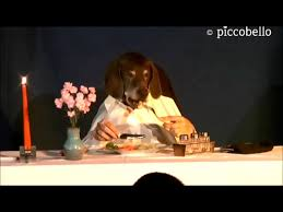 dogs at dinner table fine dining has gone to the dogs 1funny com