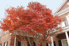 9 stunning trees colorful curb appeal