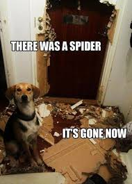 Best 25 Spider Meme Ideas - best 25 funny animals with captions ideas on pinterest cute