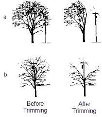 tree trimming bryan utilities