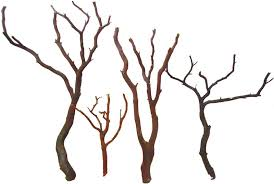 manzanita branches for sale manzanita bird perches manzanita bird trees