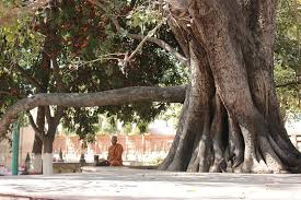 the buddha tree trippin thru