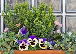Garden Club Ideas 5 Window Box Ideas To Make Your Home Bloom Garden Club